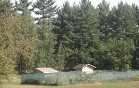 The School Garden:  A Hidden Treasure