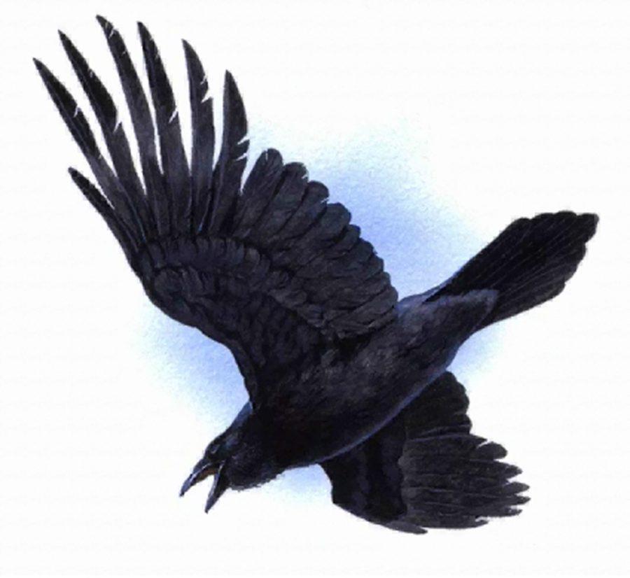 The Ravens: Should I Join?