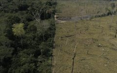 Deforestation in Brazil